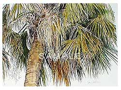 Under the Palmetto I and II